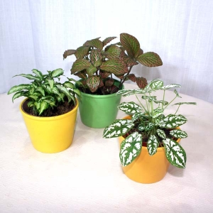 3 Pots Of Indoor Plants