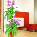 Artificial Orchid Plants With Boston Fern About 168cm Height