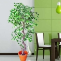 Artificial Ficus Benjamina Tree 5 Ft