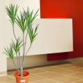 Artificial Yucca Plant 4 Feet Height