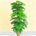 Artificial Monstera Plant 5 Feet Height