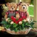 12 inches Couple Bear with 6 Red Roses & 6 ferrero Rocher