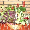 Live Potted Indoor Plants Assorted