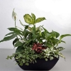 Mixed Indoor Plants In Basket Arrangement