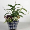 Mixed Indoor Plants Planted in A Vase