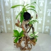 Assorted Plants In driftwood Decoration
