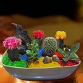 Group of catus mini garden