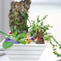 3 Live Plants Terrarium 18cm Height