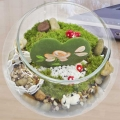 Heart shaped plant (Kerrii Hoya) with painted flowers & Live moss Terrarium