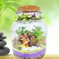 3 Mini Live Plants Terrarium in Glass Vase 16cm Height