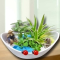 3 Mini Live Plants With Fisherman Terrarium