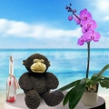 Message-in-a-Bottle ( 19cm ) Height, Monkey 12 inches & Live Phalaenopsis Orchid