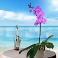 Message-in-a-Bottle ( 19cm ) Height & Live Phalaenopsis Orchid