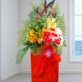Anthurium & Orchids Opening Stand Arrangement