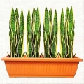Artificial Sansevieria in 60cm Long Planter Box