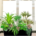 Artificial Dracaena Plants Group in Planter Box (Total Hight: 100cm)
