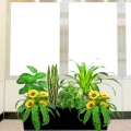Artificial SunFlower Plants Group in Planter Box (Total Hight : 80cm)