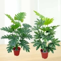 Artificial Philodendron Selloum Plant & Artificial Fatsia Plant . Total Height : 65cm