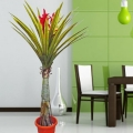 Artificial sharp leaves Flowering Plant 168cm Height