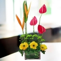 3 Red Anthurium with 3 Yellow Gerbera in Glass Vase
